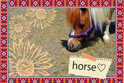 午年だからとことん推します『馬』画像だよ、全員集合!!