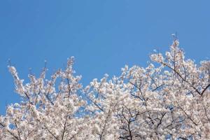 子連れでのお花見を楽しむポイントは『ぬかりない事前準備』だった!