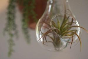 子どもがいても観葉植物は飾れる!『ハンギンググリーン』でおしゃれインテリアを楽しもう!