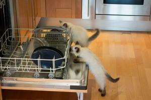 ママに食洗機は必需品?!実際に使うと分かるメリット・デメリット