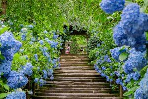 梅雨の季節こそ楽しい『神奈川県』の観光スポット【家族旅行スポット紹介】