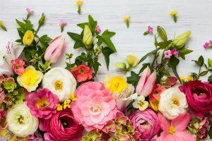 プレゼント選びの参考に!秋の花の『花言葉』